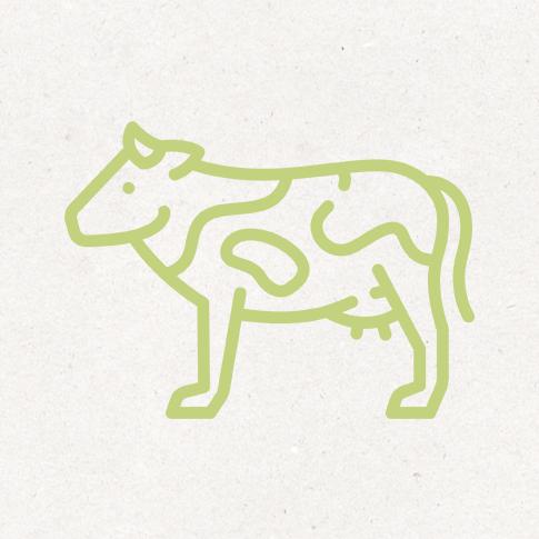 Kalb und Rind